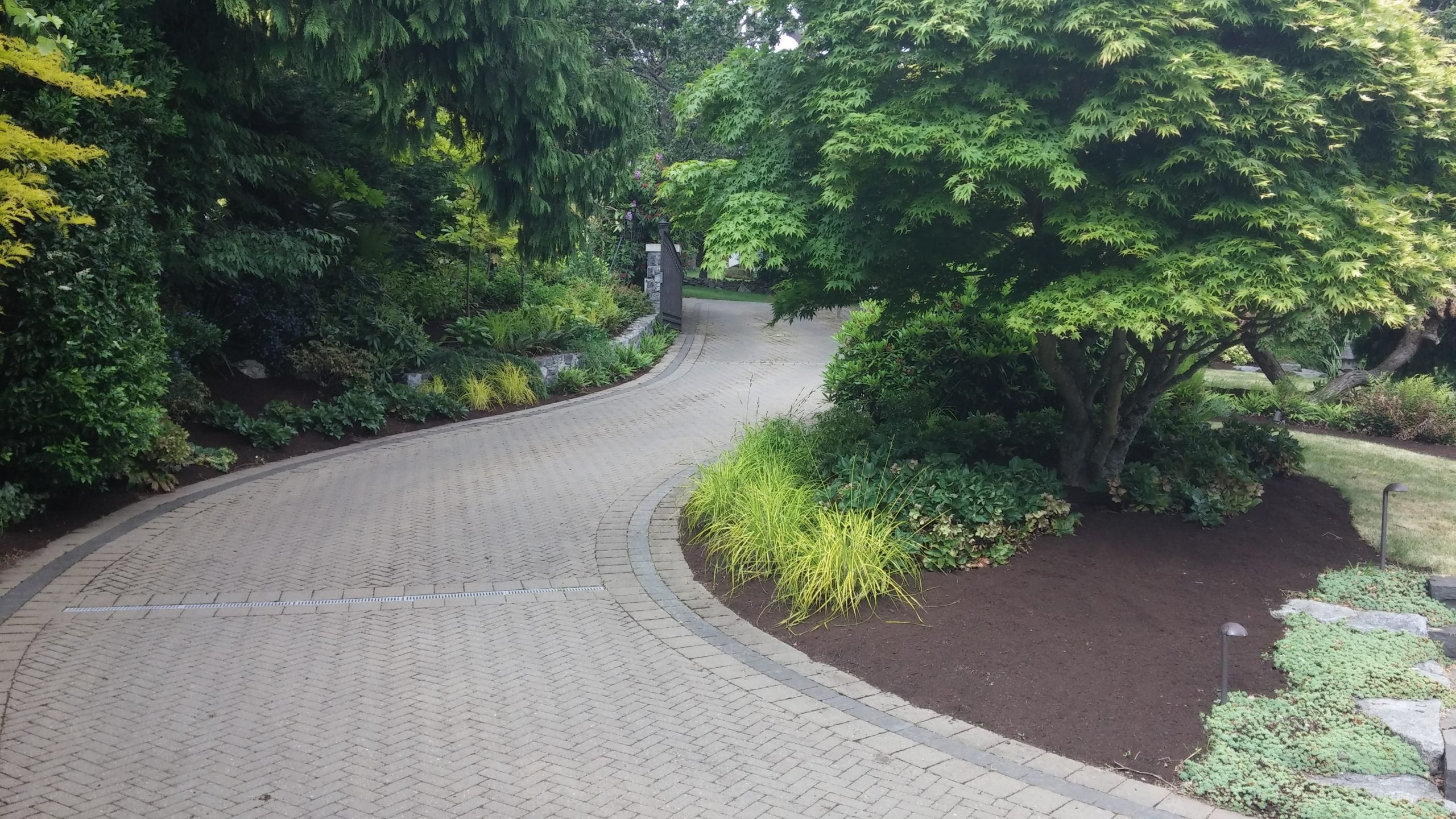 Victoria, BC Tree Care Services