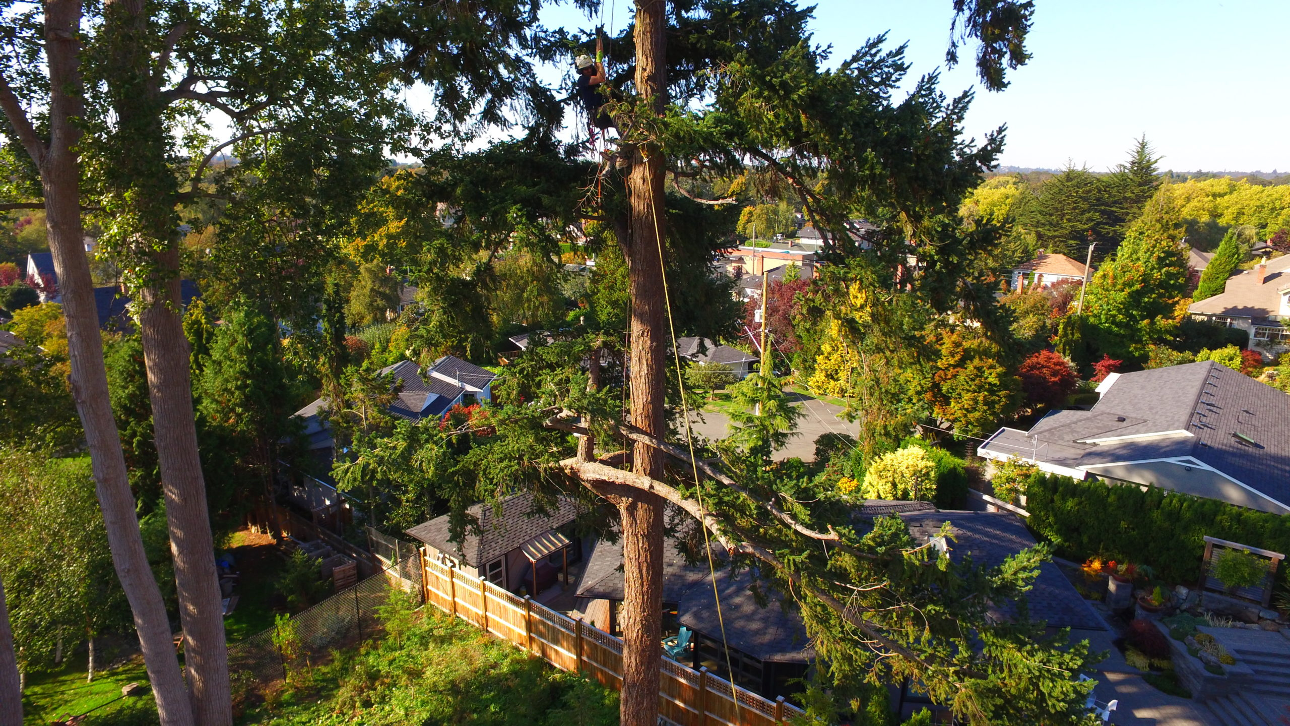 Our Victoria, BC Arborist Years of Experience Make the ...
